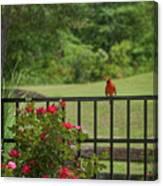 Cardinal On Fence Canvas Print