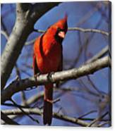 Cardinal On Watch Canvas Print