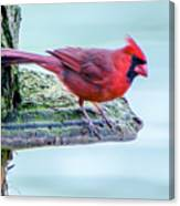 Cardinal Perched Canvas Print
