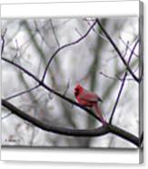 Cardinal Perched On A Branch Canvas Print
