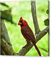 Cardinal Render Canvas Print