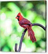 Cardinal Rule Canvas Print