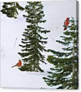 Cardinal Trees Canvas Print