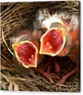 Cardinal Twins - Open Wide Canvas Print