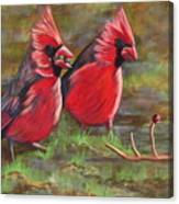Cardinal Two Canvas Print