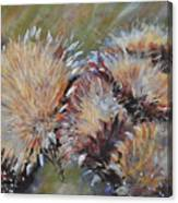 Cardoon  Canvas Print
