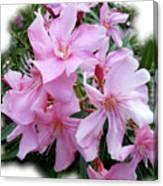 Caribbean Oleander Canvas Print