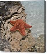Caribbean Starfish Canvas Print