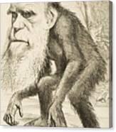 Caricature Of Charles Darwin Canvas Print