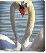 Caring Swans Canvas Print