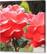 Carmel Mission Roses Canvas Print