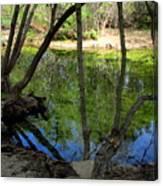 Carmel River At Gilmore Ranch Canvas Print