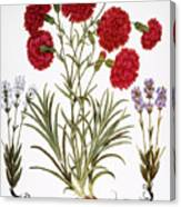 Carnation & Lavender, 1613 Canvas Print