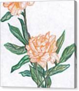 Carnation Flower Canvas Print
