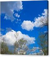 Carolina Blue Sky After The Rain Canvas Print