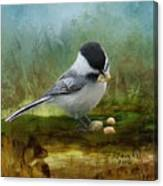 Carolina Chickadee Feeding Canvas Print
