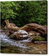 Carolina Stream Canvas Print