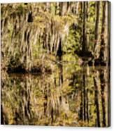 Carolina Swamp Canvas Print