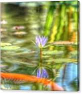 Carp And Lily Canvas Print