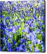 Carpet Of Blue Canvas Print