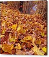 Carpet Of Fall Leaves Canvas Print