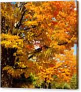 Carpet Of Leaves Canvas Print