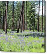 Carpet Of Lupine In Washington Forest Canvas Print