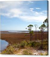Carrabelle Salt Marshes Canvas Print