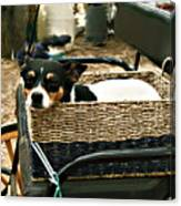 Carriage Dog Canvas Print