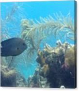 Carribean Sea Life Canvas Print