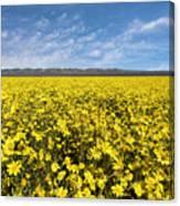 Carrizo Plain Desert Sunflower Field Afternoon Canvas Print