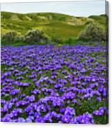 Carrizo Plain National Monument Wildflowers Canvas Print