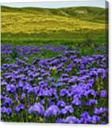 Carrizo Plain Wildflowers Canvas Print