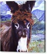 Carrot Top Canvas Print