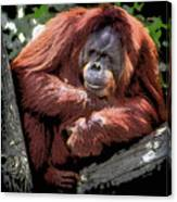 Cartoon Comic Style Orangutan Sitting In Tree Fork Canvas Print
