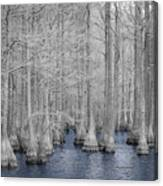 Carvers Cypress Ir 2 Canvas Print