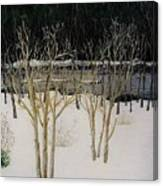 Cary Winter-sold Canvas Print
