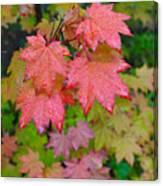 Cascade Autumn Leafs 4 Canvas Print