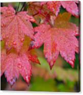 Cascade Autumn Leafs 5 Canvas Print