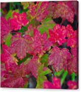 Cascade Autumn Leafs 7 Canvas Print
