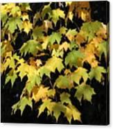 Cascading Leaves Canvas Print