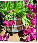 Cascading Purple Tulips  Canvas Print