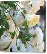Cascading White Roses Canvas Print