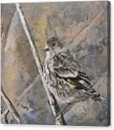 Cassin's Sparrow Canvas Print