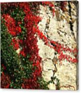 Castle Vines Canvas Print