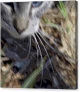 Cat A Hunting Canvas Print