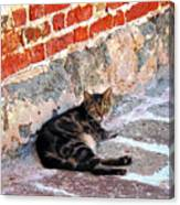 Cat Against Stone Canvas Print