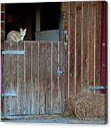 Cat And Barn Canvas Print