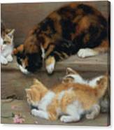 Cat And Kittens Chasing A Mouse   Canvas Print
