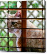 Cat At The Window Canvas Print